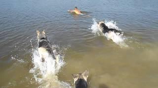 Любят ли собаки плавать?!