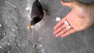 Gambar cover Memberi makan burung tiung atas tapak tangan
