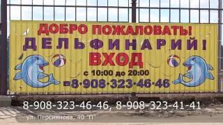 Впервые в Соль-Илецке Московский Дельфинарий.(, 2016-06-15T10:42:08.000Z)