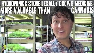 Hydroponics Store Legally Grows Medicine More Valuable than Weed aka Cannabis