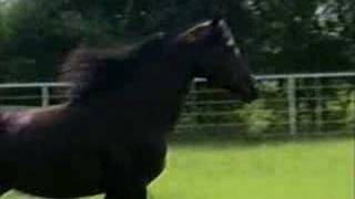My Horse Lullaby