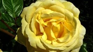 Хорошие клипы и цветы в хорошем качестве