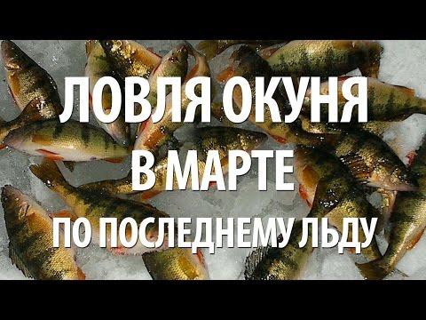Весенняя рыбалка на окуня в марте видео