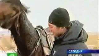 Кавказ. Къарачай. Карачаевская порода лошадей..flv(Карачаевская порода занимает достойное место среди конских пород Кавказа. Родиной породы является Карачай..., 2011-12-10T09:50:44.000Z)