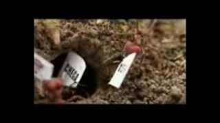 MedelliN - 7 Palmos (Videoclipe)