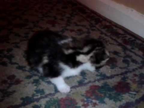 Kitten cries, mummy cat comes running