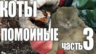 Коты помойные часть 3. Продолжаем шурф.