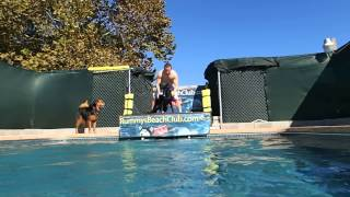Black Lab Labrador Retriever Jeeter Jumps Off Dock Into The Swimming Pool - His Daddy Is So Proud!