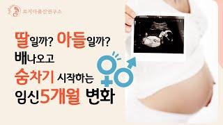 귀로듣는 임신출산정보 | 첫 태동느끼는 임신 5개월 무…