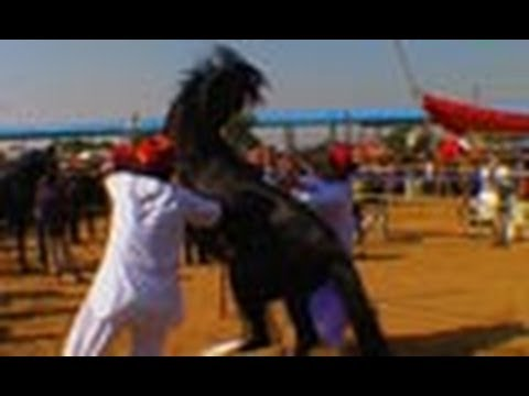 Best Horse Competition