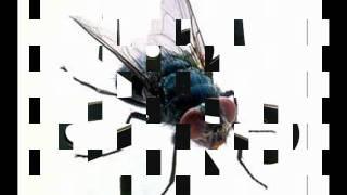 El baile de la mosca