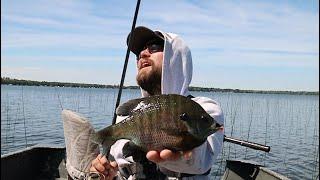 Sight Fishing Big Bluegills (BED FISHING)