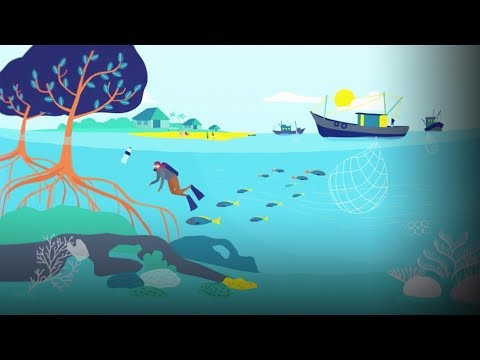 An ingenious proposal for scaling up marine protection | The Nature Conservancy