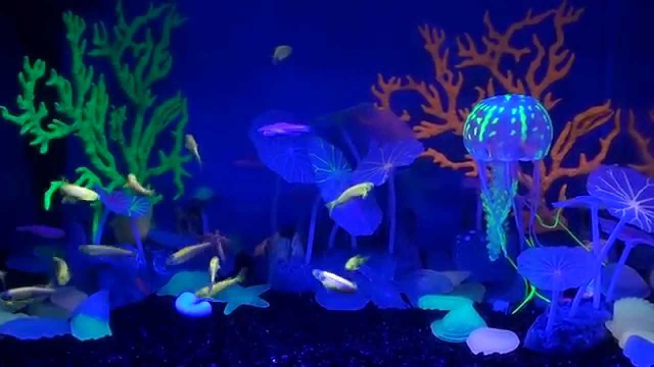 9 июн 2016. Все виды данио: https://exomenu. Ru/akvariumistika/akvariumnaya-ryba/rasbory danio-i-prochie-karpovye/ светящиеся разноцветные.