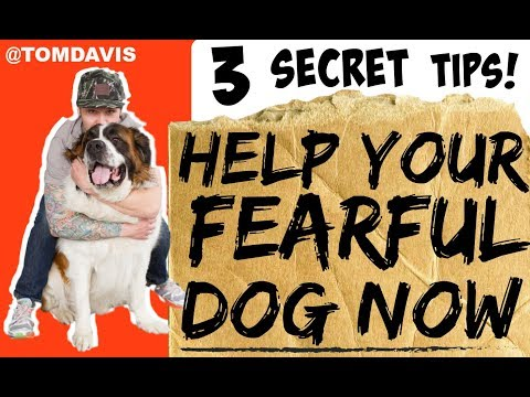 How To Build Confidence In Your Dog / How Do I Train My Fearful Dog?