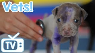 Dog TV: TV for Dogs at the Vets! The Perfect TV with Music to Calm Dogs in a Vets Waiting Room! thumbnail