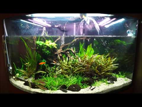 fortnightly maintenance on juwel trigon 190 planted tank youtube. Black Bedroom Furniture Sets. Home Design Ideas