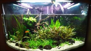 fortnightly maintenance on juwel trigon 190 planted tank