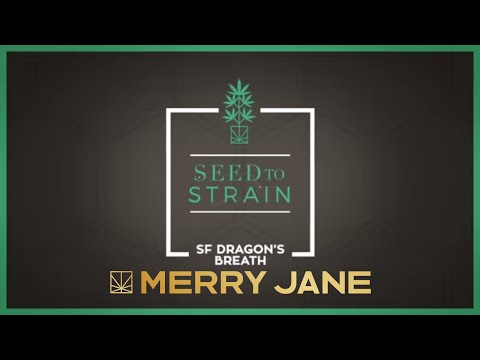 Seed To Strain: SF Dragon's Breath