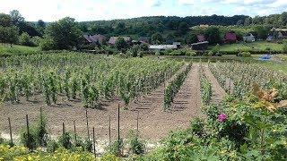 Winnica Korol - Mielnik podlaskie wina
