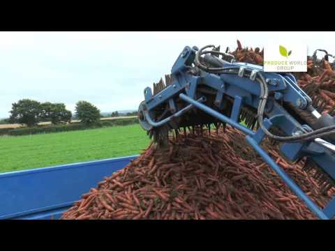 Nick Taylor Organic Carrot Producer
