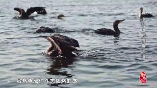 [中华优秀传统文化]小岛上的捕鱼之道| CCTV中文国际