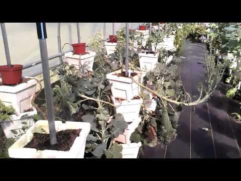 Organic Hydroponic Farming