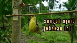 jebakan bermacam jenis burung  di batang kayu //easy biry trap how tu make tu bird trap 100% work