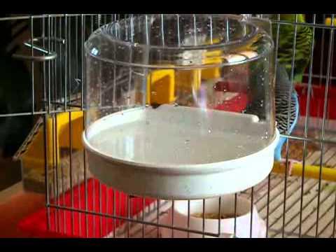 Cocorite pippy fa il bagno youtube - Tappetini per il bagno ...