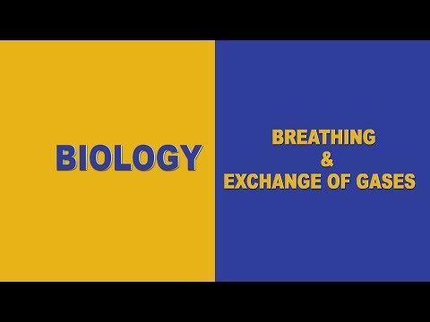 Breathing & Exchange of Gases - NEET Biology