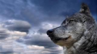 Фильм про волка