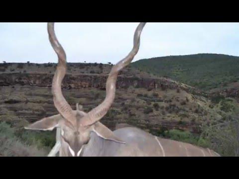 African Hope Hunting Safaris 2016 Cape Kudu