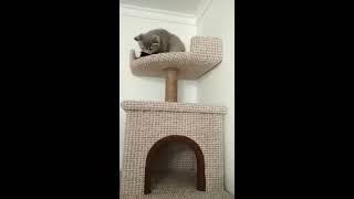 Игровой комплекс для кота своими руками!