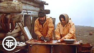 Бухта Юргенса. Фильм о супругах, поселившихся в одиноком зимовье (1989)