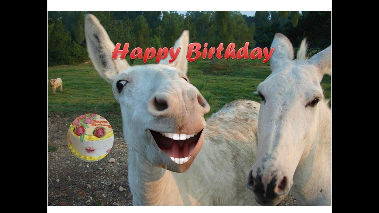 happy birthday donkey FUNNY DONKEY SINGING HAPPY BIRTHDAY   YouTube happy birthday donkey