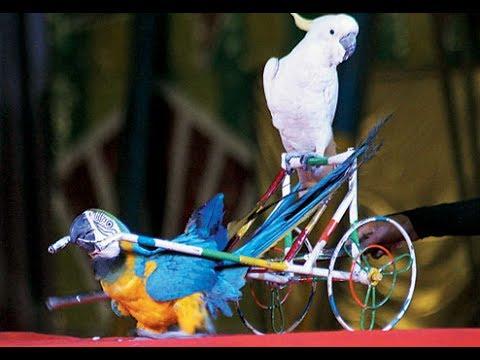 Birds Circus | Parot, Peacock, White Pigeon Circus in Noida
