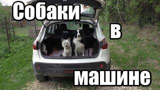 Как приучить собаку к поездкам в машине - ДРЕССИРОВКА СОБАК - Понять собаку
