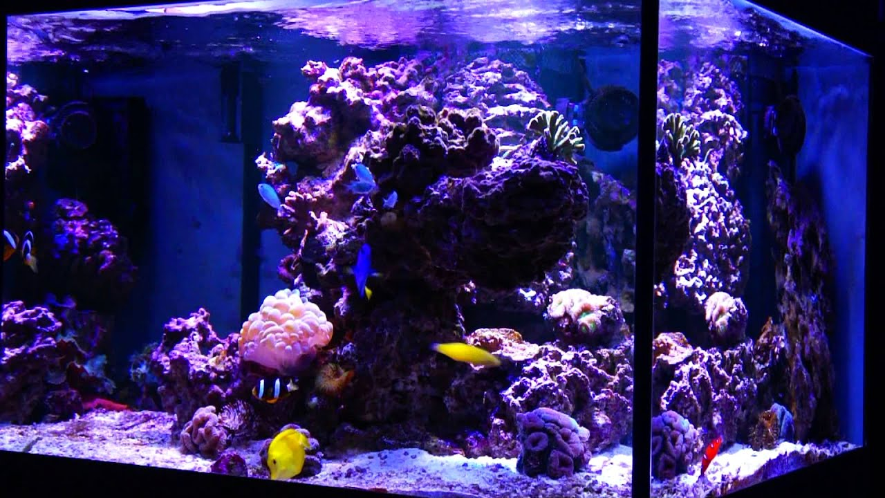 Mixed Coral Reef Cube - YouTube