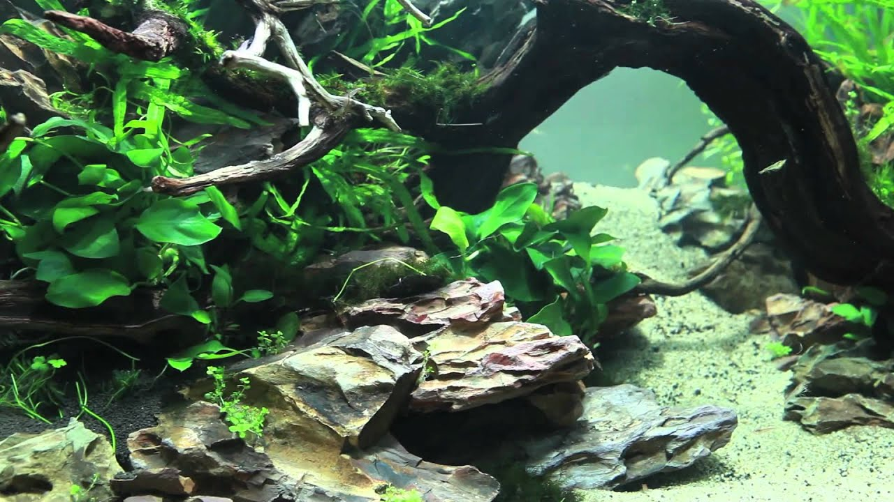 Beau 90x45x45 Planted Dragon Stone Aquascape