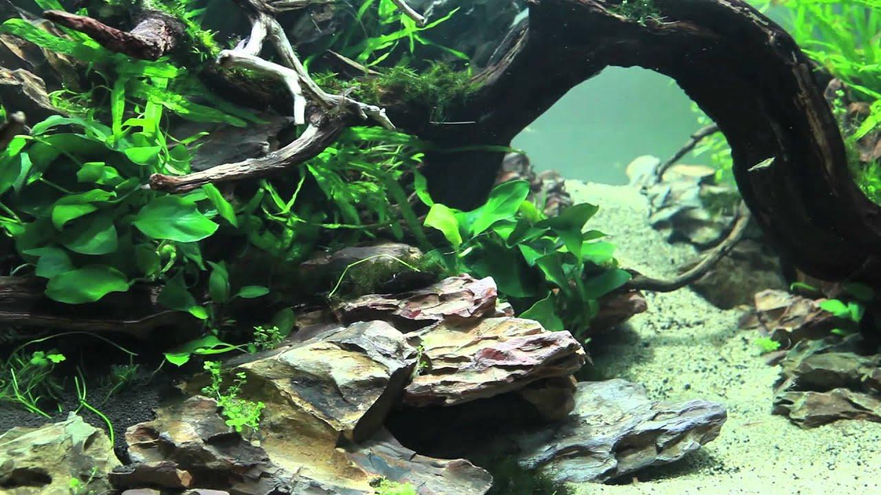 Black Live Wallpaper 90x45x45 Planted Dragon Stone Aquascape Youtube