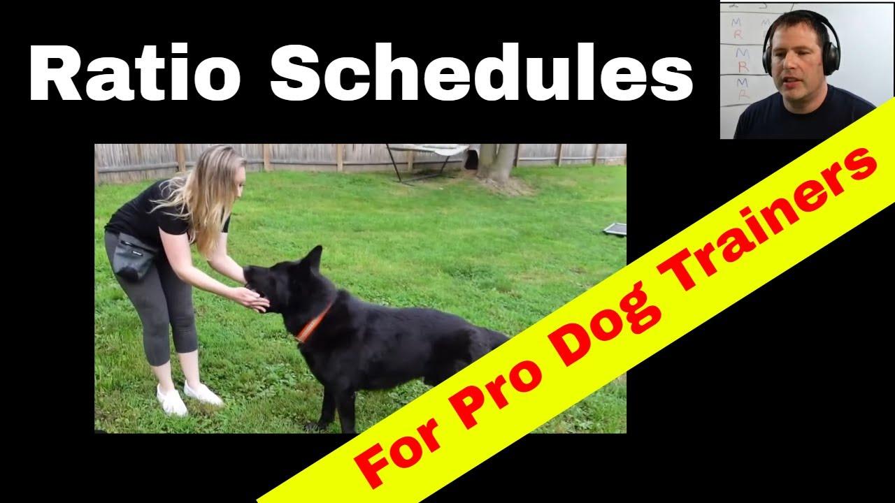 Reward Ratio Schedules for Professional Dog Trainers (K9-1.com)
