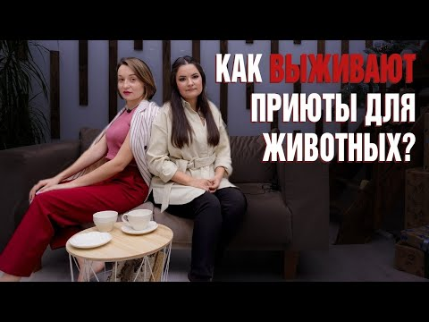 Приют для животных в Челябинске История приюта и спасение животных