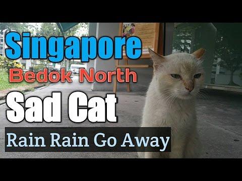 Singapore Bedok North Sad Cat Rain Rain Go Away