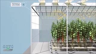 mini prezentation of industrial greenhouses / мини презентация промышленной теплицы