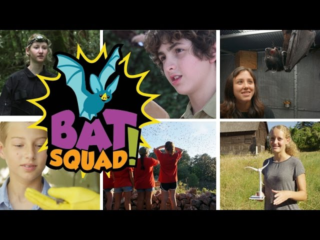 Bat Squad! - Hey Bat, What's Your Habitat?
