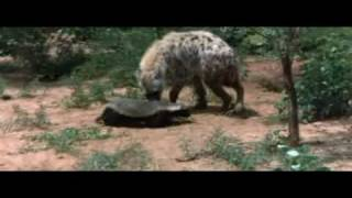 Honey Badger mpeg2video