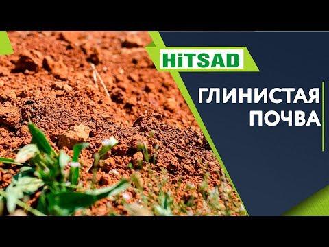 Вопрос: Будет ли дицентра расти на глинистой почве?