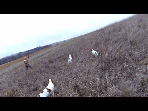 Pheasant Hunting Triple Brittany Spaniel Style(Garmin Virb)