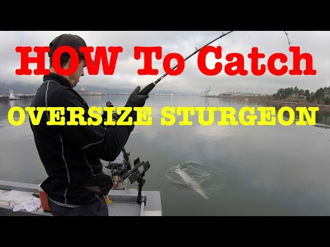 How To Catch Oversize White Sturgeon - Fishing With David Pyle