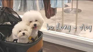 [ Vlog ] 비숑남매 강아지유모차 나들이 /강아지 …